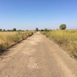 <p>Det gule er vilde dildplanter, som vokser overalt langs Caminoen </p>