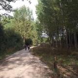 <p>Lige en tur gennem en lille skov</p>