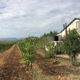 <p>Vinmarker og et hus med vinpresser</p>