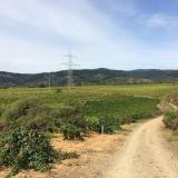 <p>Vinmarker ved Pieros</p>