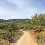 <p>Vejen ned til Valtuille de Arriba</p>