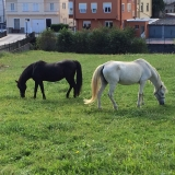 <p>I udkanten af Vega de Valcarce var disse heste</p>