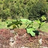 <p>Man kan ikke holde squash planter nede. Denne var på vej over en meter høj mur</p>