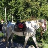<p>Heste til leje</p>