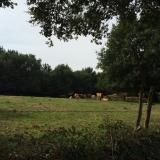 <p>Køer og mark, kører og mark...</p>