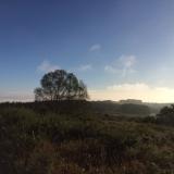 <p>Smukt træ i morgensolen</p>