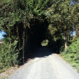 <p>Tunnel af træer</p>