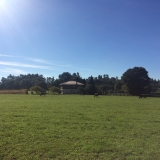 <p>Endnu en mark med køer ved Penas</p>