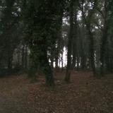 <p>Skove og marker, skove og marker</p>