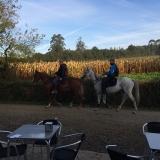 <p>Hestene fra i går</p>