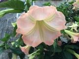 <p>Smukke blomster på vejen</p>