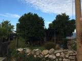 <p>Appelsin- og limetræ i Carballal</p>