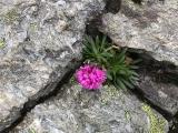 <p>Nature always find a way</p>